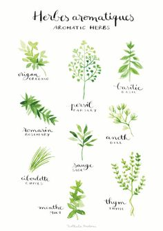 Aromatic herbs fine watercolor print by Nathalie Ouederni on Etsy. $18.29. See more at http://www.studiokalumi.com.