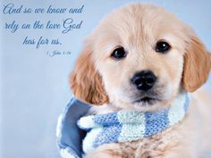 We know and rely on the love God has for us