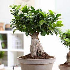 10 Ideeen Over Bonsai In 2020 Bonsai Planten Kamerplanten