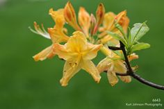 6643 http://www.kurtjohnsonphotography.com/