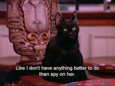 salem the cat gif Black Cat Memes, Salem Cat, Salem Saberhagen, Boy Meets World, Parks And Recreation, Character Aesthetic, Cat Gif, Reaction Pictures, Crazy Cats