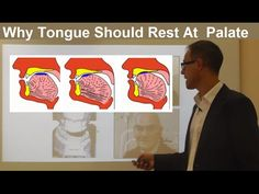 Should Tongue Rest/ Touch at the Palate/ Maxilla/ Roof of the Mouth by Dr Mike Mew - YouTube