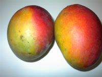 Mangoes - Jamaican Fruits (Jamaica)