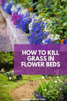 How to kill grass in flower beds Grass can easily get into flower beds, making them messy and disrupting the growth of other plants. If this is an issue you struggle with, you need to read our helpful guide on how to kill grass in flower beds! Garden Yard Ideas, Lawn And Garden, Garden Projects, Garden Decorations, Garden Tools, How To Kill Grass, Garden Weeds, Rain Garden, Garden Care