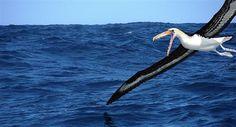 «Πελαγόρνιθες» με φτερά 6 μ. τρομοκρατούσαν την Ανταρκτική  Απολιθώματα ενός τρομακτικού πτηνού π...