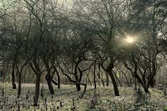 Winter garden - Pinned by Mak Khalaf Nature coldgardenlightsnowsuntreeswinter by danraizfoto