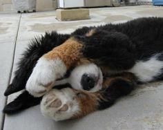Hide and Seek. I see you!  | Cutest Paw