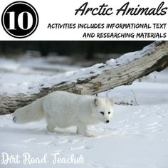 Guide your students through a research project on arctic animals. Activities for a week-long non-fiction study of arctic animals. Fact Sheets, interactive non-fiction reader, non-fiction features, pamphlet for research and craftivity. Arctic Animals included are: Polar Bears, Arctic Fox, Arctic Hare, Caribou, and the Walrus. Use with other non-fiction texts on arctic animals to meet all common core Informational standards.
