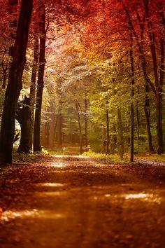 Herbstwald by fotissima
