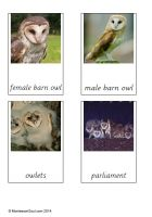 Free montessori cards for teaching the names within the owl family (Male and female - there are no special names and Owlets) and their group name (parliament).