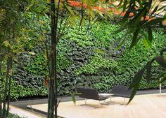 69541b003aa 59 best Edible Wall images in 2016   Herb garden, Plants, Vertical ...