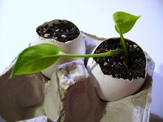 Build/Make/Craft/Bake: How to make eggshell planters