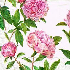 Decoupage servilletas 4 piezas PAEONIA crema 33cm flores Decoupage servilletas…
