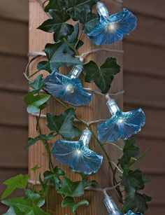 Our solar string lights with blue morning glory flowers are a gorgeous evening accent and customer favorite. Blue Morning Glory, Morning Glory Flowers, Plastic Bottle Flowers, Plastic Bottle Crafts, Plastic Bottles, Solar String Lights, Solar Lanterns, Garden Whimsy, Garden Supplies