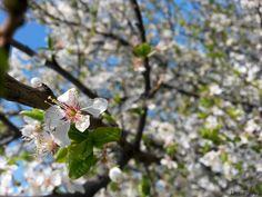 #flowers #sky #green #white #beauty