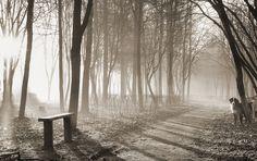 пейзаж, чб, природа, лес, животные, обработка