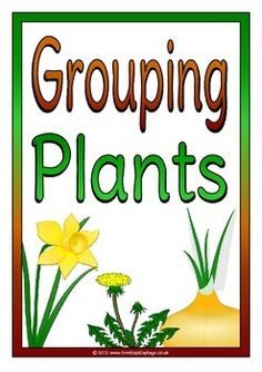 A set of 10 printables about different plant groups. Includes: title page, explanatory page, deciduous tree, coniferous tree, shrubs, grasses, cereals, algae, succulent and ferns. Plants identified as either flowering or non-flowering. Visit our TpT store for more information and for other classroom display resources by clicking on the provided links.