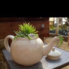 Succulents in a teapot!  How often do you see old teapots at yard sales and resale shops!!  Love it
