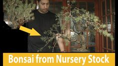 How to make bonsai tree From Lodgepole Pine Nursery Stock with Yusuf #197