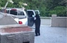Hilarious video: Bear breaks into Metro Vancouver truck
