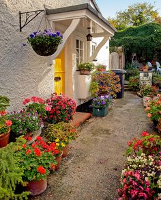A delightful flower-filled yard In Odiham, Hampshire by Anguskirk, via Flickr