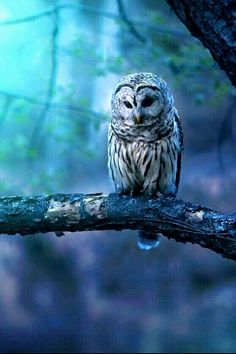 Beautiful #Owl  ❤