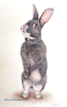 """""""Lola"""", watercolor bunny rabbit painting by animal artist Teresa Silvestri.  Original sold, but prints & cards available.  Photo reference thanks to East Bay Rabbit Rescue."""