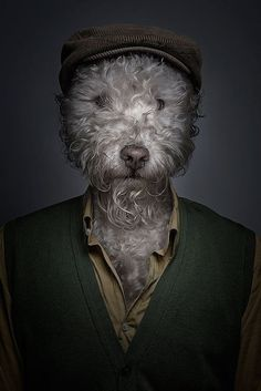 Underdog is a collection of whimsical portraits of dog dressing up like human, created by artist Sebastian Magnani. Moda Animal, Foto Fun, No Bad Days, Animal Heads, Dog Costumes, Animal Fashion, Dog Dresses, Dog Portraits, Pet Clothes