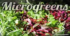 What You Should Know About MicroGreens (And How To Grow Your Own)