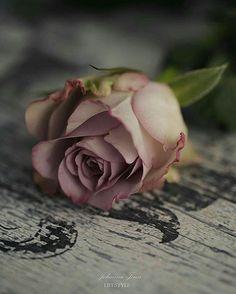 Beautiful Flowers Wallpapers, Beautiful Rose Flowers, Pretty Wallpapers, Book Flowers, Paper Flowers, Vintage Flowers, Vintage Floral, Photo Rose, Flower Aesthetic