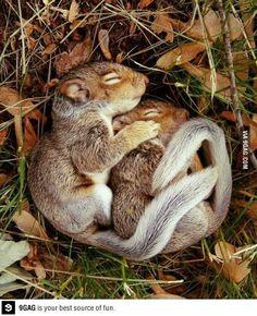 """<<Sí sentir amor verdadero por un animal es cosa de locos... ENTOCES No me interesa ser """"NORMAL"""">>"""