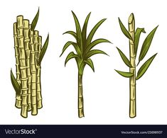Sugar cane plants isolated on white background vector image on VectorStock Plant Illustration, Graphic Design Illustration, Sugar Cane Plant, Planner Doodles, Art Painting Gallery, Plant Vector, Sky Landscape, Plant Drawing, Art Design