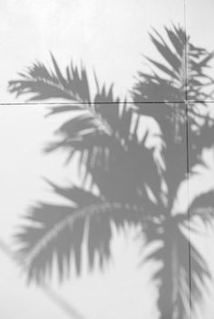 Palm Print Shadow