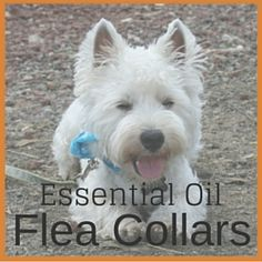 Essential Oil Flea Collars for Dogs