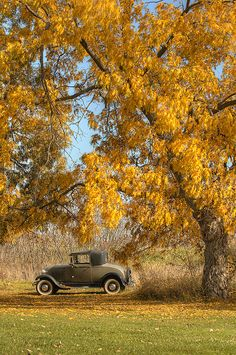 Under the tree,...a car for thee.