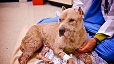 Petition · Please amend KRS 525.125 to include the owning, possessing, keeping, breeding, training, selling, or transferring of four-legged animals for fighting purposes within the offense of cruelty to anima · Change.org