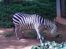 Thiruvananthapuram Zoo - Wikipedia, the free encyclopedia