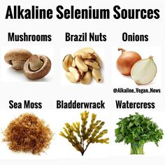 To purchase sea moss  bladderwrack click the link in bio. Takes 7 to 10 days to ship. The most important known function of selenium is as a component of the antioxidant enzyme glutathione peroxidase. Selenium is a co-factor in an enzyme that protects body tissues from oxidation by unstable free radicals. Selenium also works closely with the antioxidant vitamin E. Protects all membranes reduces risk of cancer enhances immune system anti-oxidant. Lowers requirement for B12. Selenium Deficiency…