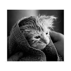 FFFFOUND!   insert clever phrase here ❤ liked on Polyvore featuring animals, cats, pictures, backgrounds e photos