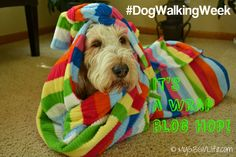 My GBGV Life wrapping up stories from our #DogWalkingWeek challenge