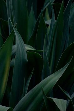 Close-up of dark green leaves. Green Leaves, Plant Leaves, Tumblr Photography, Photography Flowers, Texture Photography, Green Life, Green Plants, Belle Photo, Shades Of Green