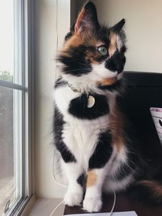 Industrious Cream Cat Bowl Small Pet Supplies