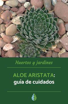 Aloe, Suculentas Cactus, Succulents, Natural, Gardens, Cactus Plants, Names, Types Of Succulents, Watering Plants