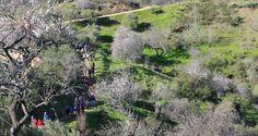 'Amendoeiras em Flor' no Alta Mora reuniu 400 participantes! | Algarlife