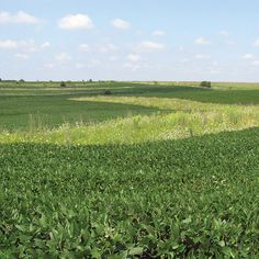 Native Prairie Strips: A Game-Changing Farming Technique - Organic Gardening - MOTHER EARTH NEWS