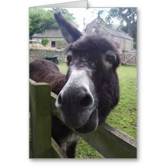 ==> consumer reviews          Donkey Birthday Wishes Greeting Cards           Donkey Birthday Wishes Greeting Cards lowest price for you. In addition you can compare price with another store and read helpful reviews. BuyDeals          Donkey Birthday Wishes Greeting Cards Here a great deal...Cleck See More >>> http://www.zazzle.com/donkey_birthday_wishes_greeting_cards-137343623584189090?rf=238627982471231924&zbar=1&tc=terrest