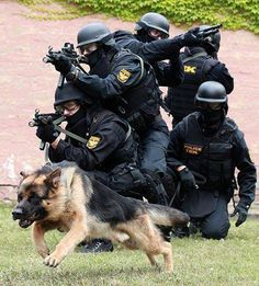 .Always glad to see police dogs on the job...