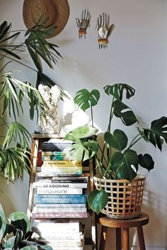 The beginner's guide to indoor plants - Vogue Australia