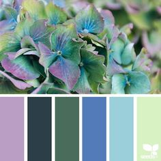 today's inspiration image for { flora hues } is by @j_tolstrup ... thank you, Jette, for another gorgeous #SeedsColor image share!