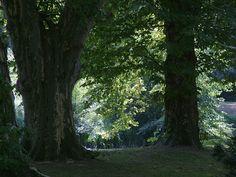 Royal garden, Hlohovec, Slovakia Royal Garden, Environment, Plants, Plant, Planets